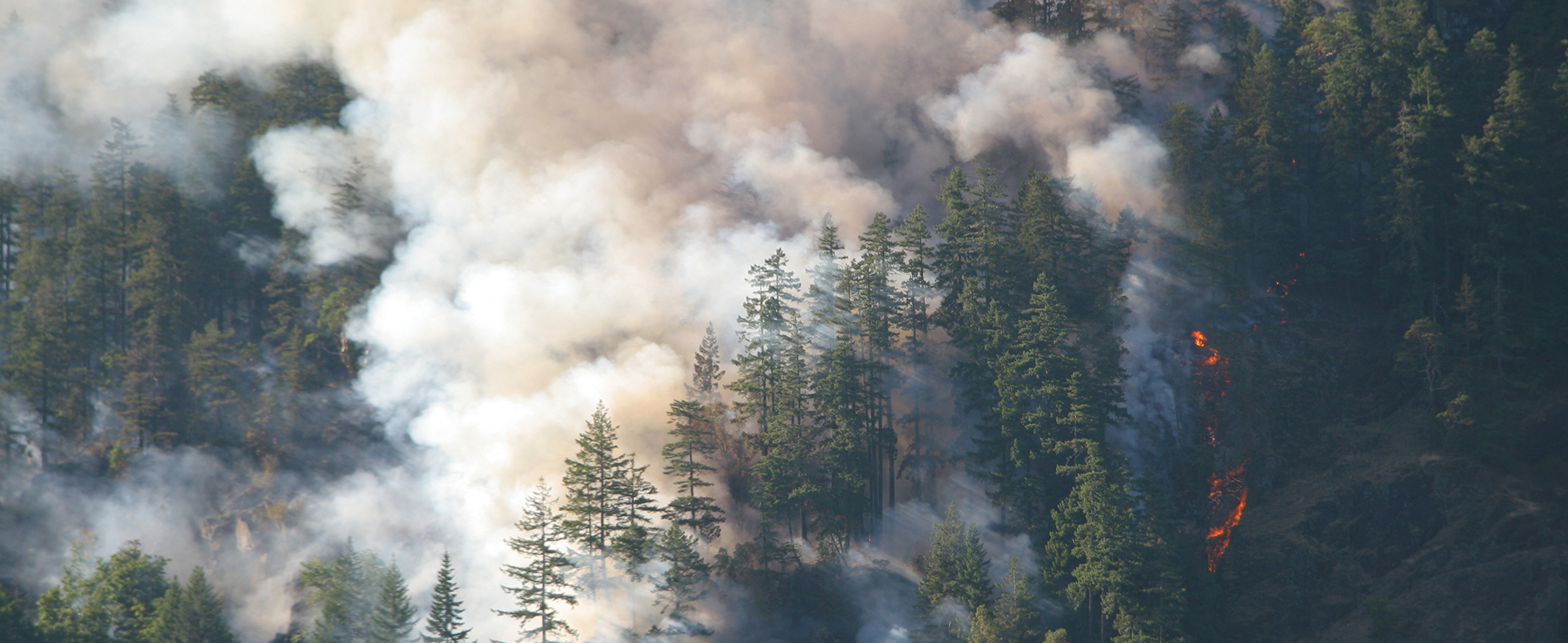 Silviculture fire forest health